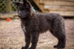 Zeke Puppy1