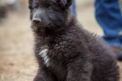 Zeke Puppy2