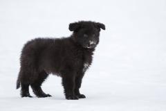 Zeke Puppy3