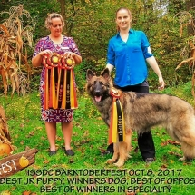 Osiris Win Photo Barktoberfest, Shiloh Shepherd, Dog, Maryland, BOS, Best of Opposite