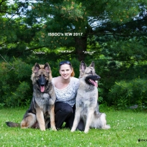 IEW 2017, Dogs, Shiloh Shepherd, Dog Shows, Maryland