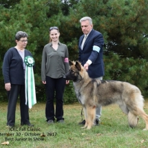 Shiloh Shepherd, Dog, Maryland, ICKC Best Junior in Show