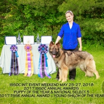 Shiloh Shepherd, Dog, Maryland, IEW 2018, Puppy of the Year