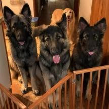 Gus, Jesse and Stella
